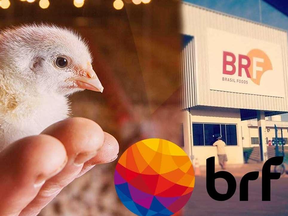 تاریخچه کمپانی BRF برزیل