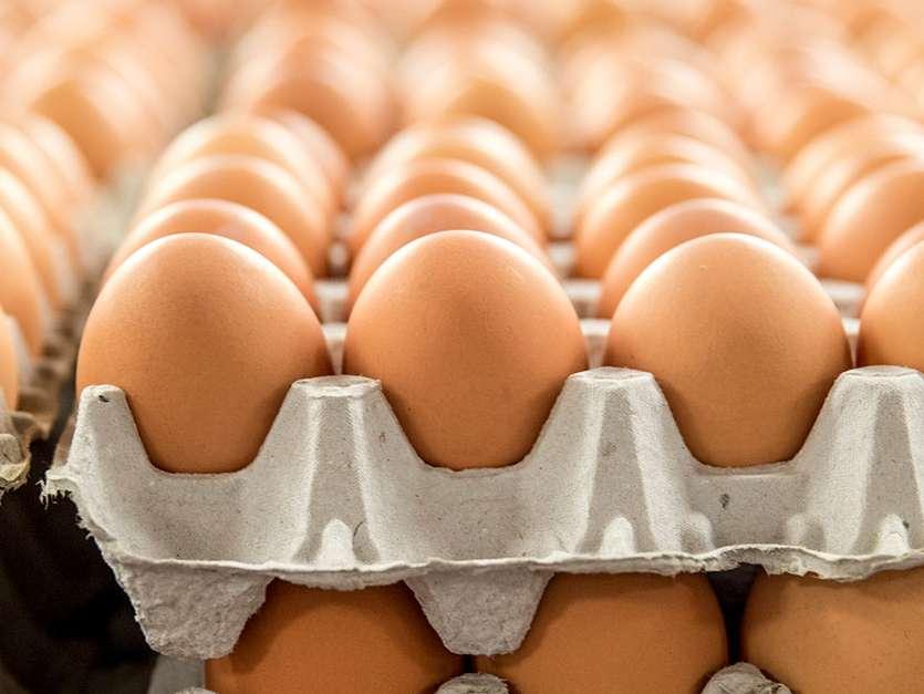 تولید تخم مرغ به یک میلیون تن می رسد