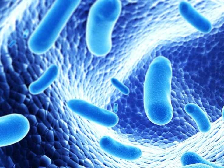 پی بردن به نقش پروبیوتیک ها و پربیوتیک ها در طیور