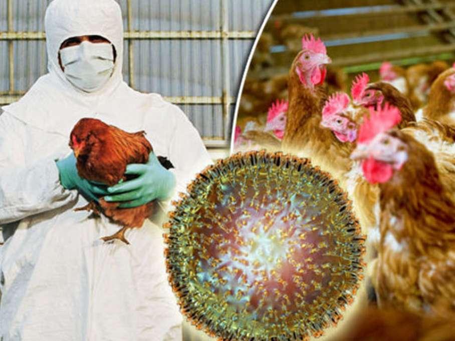 استراتژی های کنترل آنفلوآنزای پرندگان