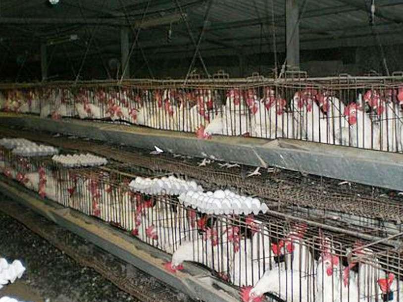 خلاء ۲۰درصدی عرضه تخم مرغ در بازار