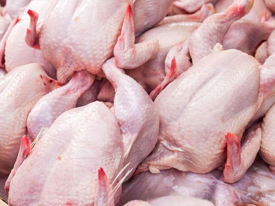 افزایش قیمت مرغ ربطی به شیوع آنفلوانزا ندارد