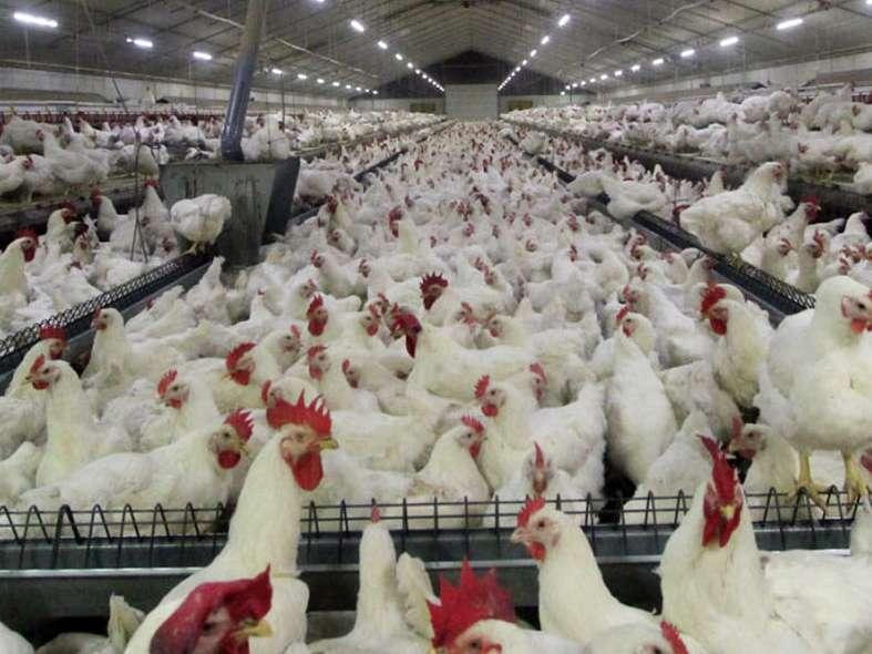 استان سمنان از بیماری آنفلوانزای حاد پرندگان پاک است