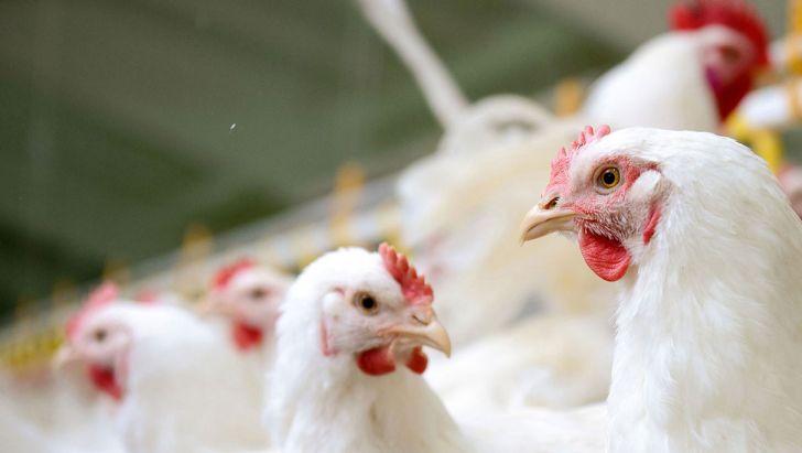 لازمۀ آگاهی در مصرف آنتی بیوتیک