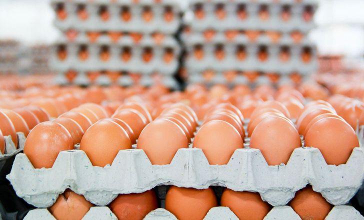افرایش قیمت هرکیلو تخم مرغ به 8 هزار تومان