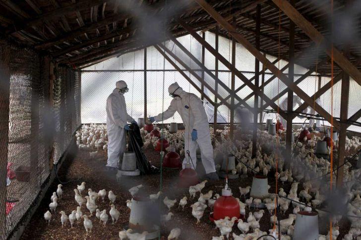 مهار-آنفولانزای-فوق-حاد-پرندگان-در-کشور