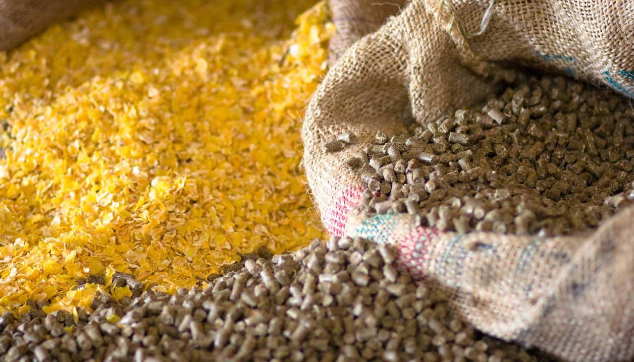 تمهیدات جهاد کشاورزی برای تامین خوراک دام دامدارن