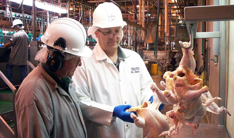 طرح ارتقای کیفیت گوشت مرغ در کشور اجرایی شد