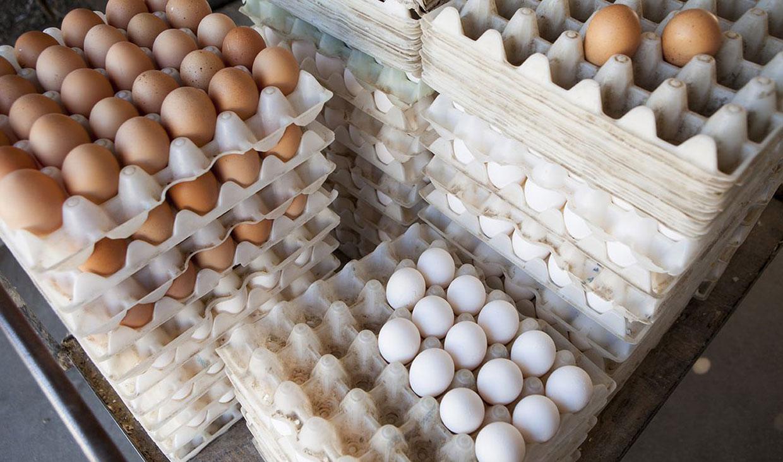 عرضه تخممرغ کمتر از نرخ مصوب ستاد تنظیم بازار