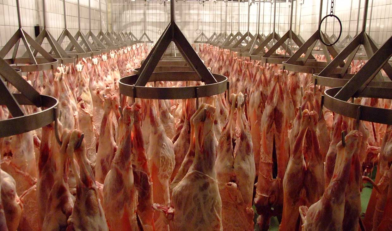 اختلاف چشمگیر قیمت گوشت از دامداری تا فروشگاه