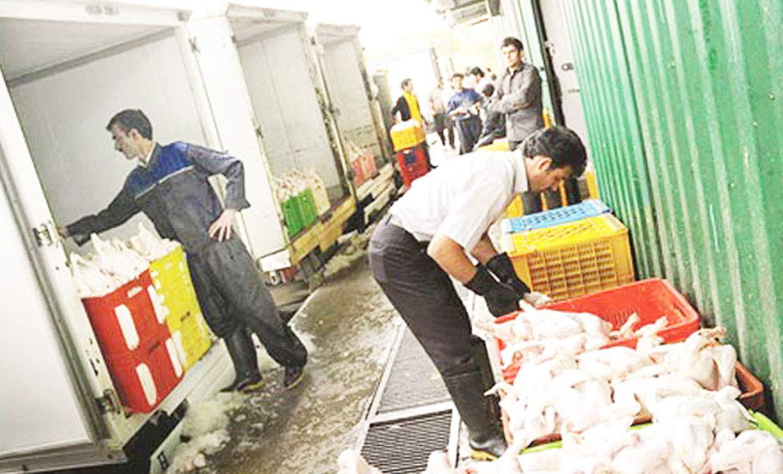 حجم توزیع مرغ در استانهای مسافرپذیر افزایش مییابد