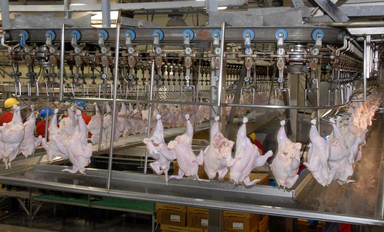 پشت بارنامهای و دلالی از علل اصلی افزایش قیمت مرغ