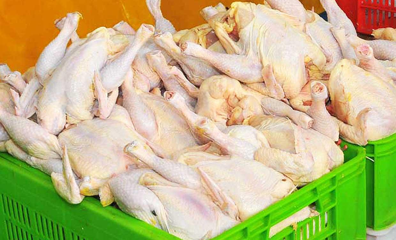 نیازی به واردات گوشت مرغ وجود ندارد