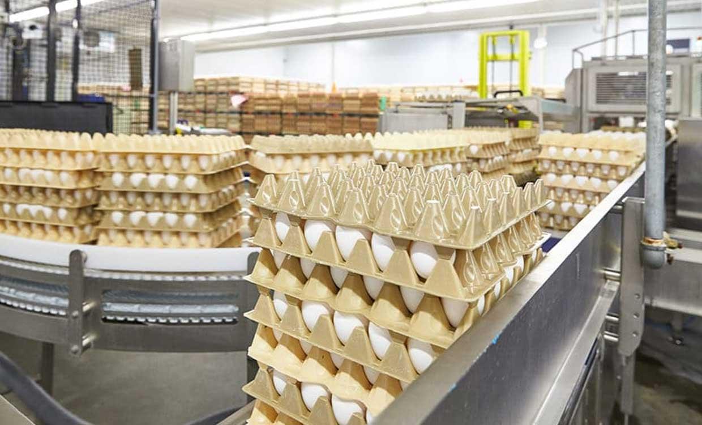زیان ۱ هزار و ۴۰۰ تومانی مرغداران در فروش هر کیلو تخم مرغ