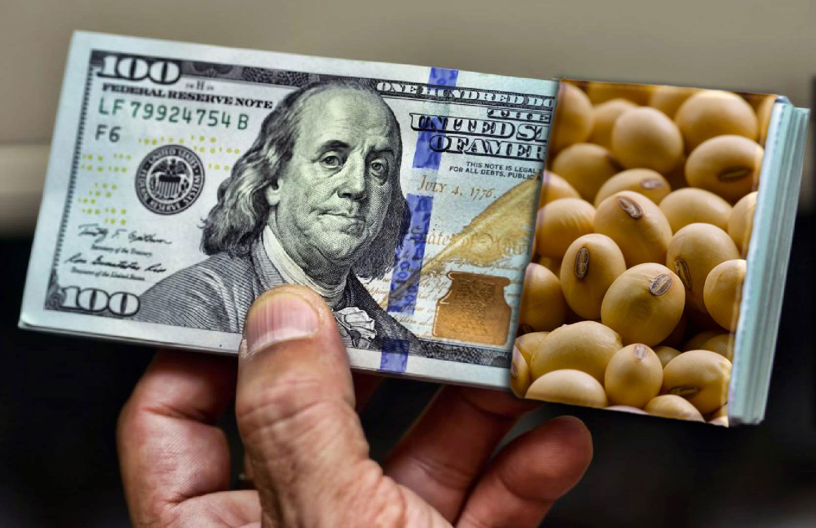 رانت خواریها مانع توزیع ارز برای واردات نهادههای دامی شده است