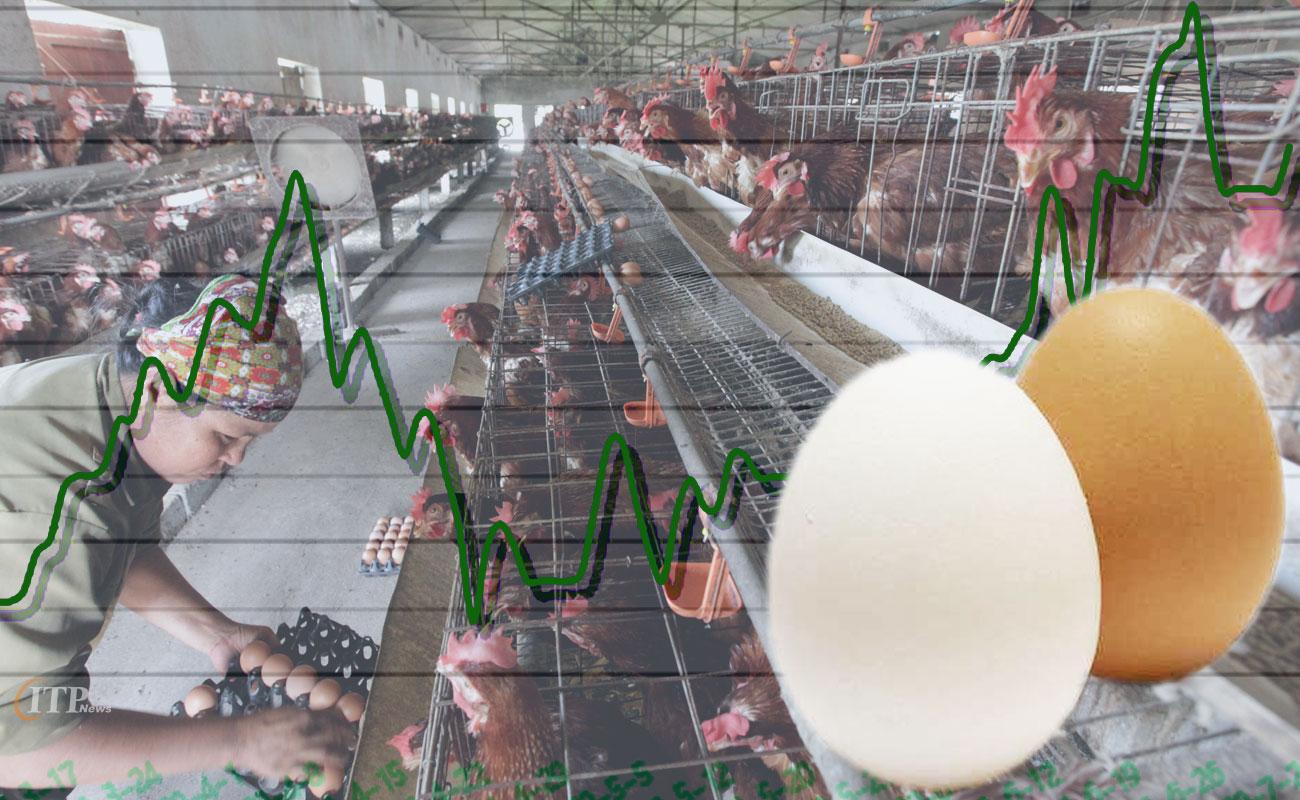 محاسبه و آنالیز قیمت تمام شده تولید یک کیلو تخم مرغ