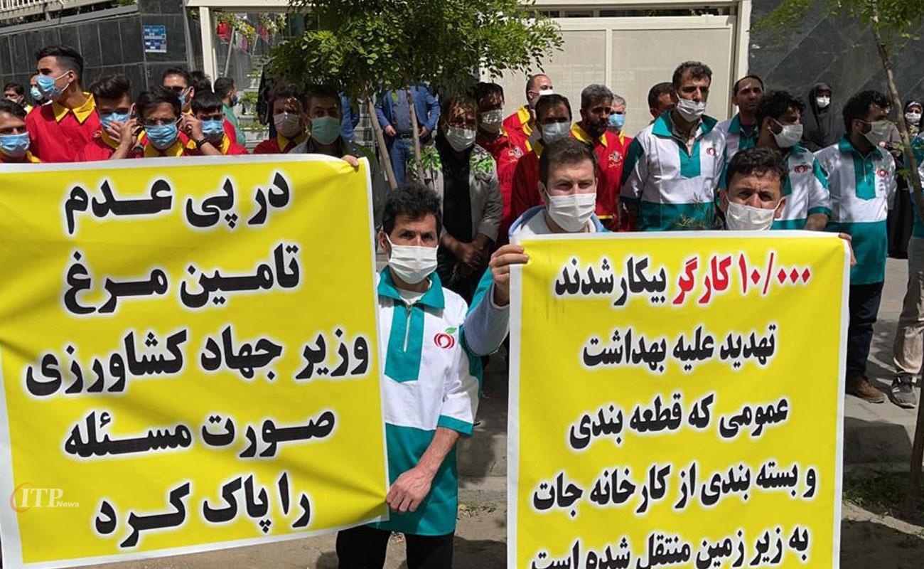 تجمع کارگران قطعه بندی مرغ در پی ممنوعیت تولید آن در مقابل وزارت جهاد کشاورزی