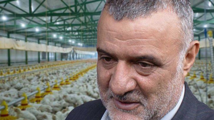 حجتی: زنجیره تولید در صنعت مرغداری باید تقویت شود