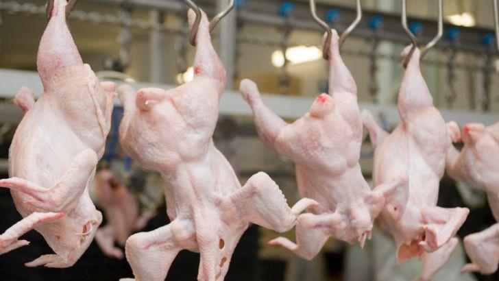 معاون وزیر صمت: قیمت مرغ قطعا تا آخر ماه کاهش مییابد