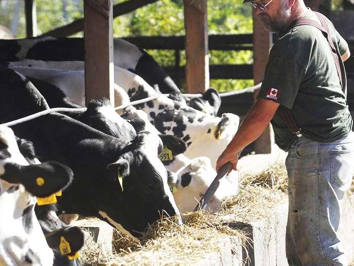 افزایش تولید شیر در گاوهای شیرده از طریق آنزیم هایی با فیبر کاهش یافته
