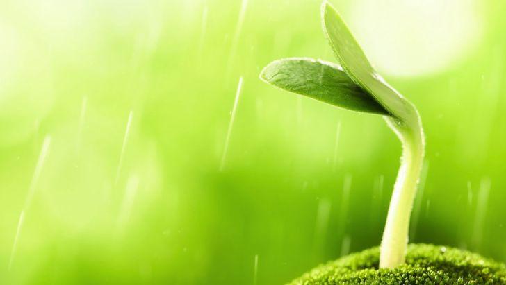 تولید ۲ نانوداروی افزایش سیستم ایمنی دام و طیور از عصاره گیاهان دارویی