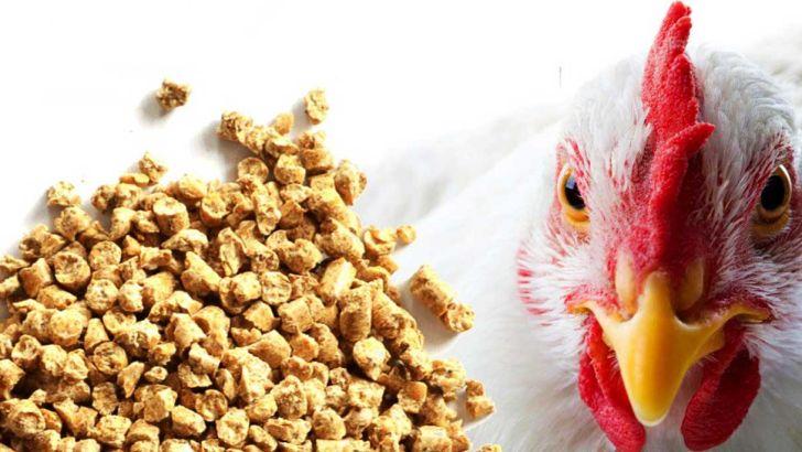 دان ارزان در مقابل دریافت مرغ