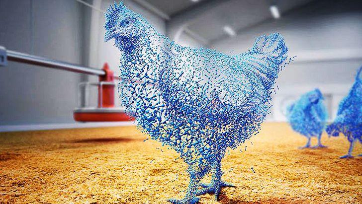 تشخیص ارگانیک بودن مرغ با ردیاب هوشمند