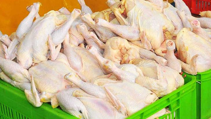زنجان مشکلی در تولید و توزیع گوشت گرم مرغ ندارد