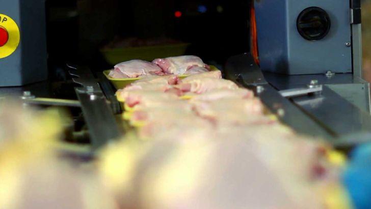 روزانه ۲۲۰ تن مرغ در مازندران توزیع می شود