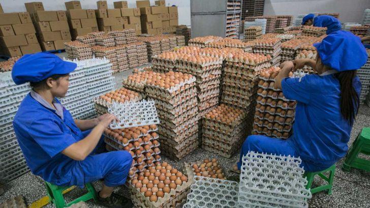 صنعت تخم مرغ چین