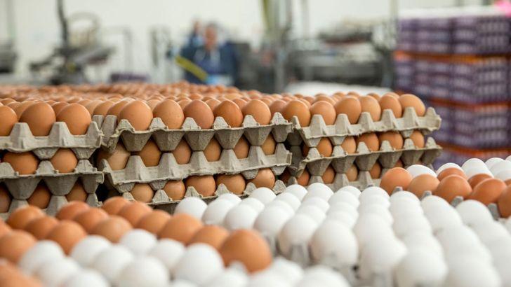 آمار صادرات تخم مرغ در سال ۹۷ به صفر رسید