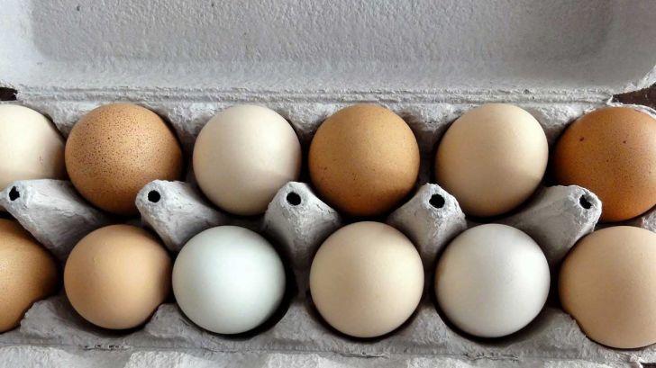 بهینه سازی اندازۀ تخم مرغ در مرغ های تخمگذار تجاری