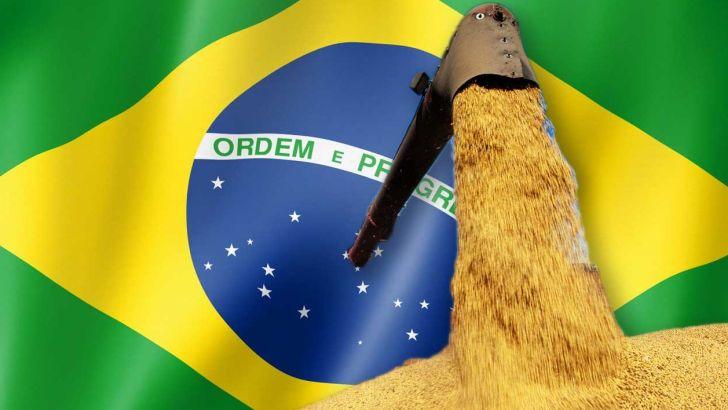 سال بهبود خوراک برزیل