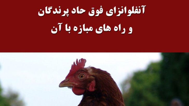 آنفلوانزای فوق حاد پرندگان و راه های مبازه با آن