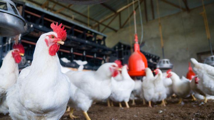 توجه ویژه به صنعت مرغداری ضروری است