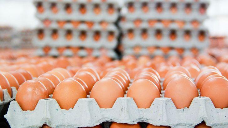 آزاد شدن صادرات، قیمت تخم مرغ را افزایش داد