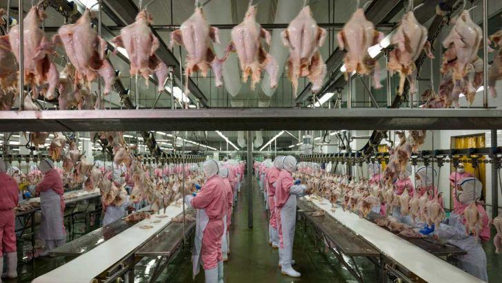 چشم اندازی قوی برای تولیدکنندگان مرغداری آسیا در سال 2019 میلادی