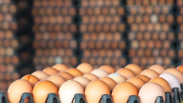 قیمت هر شانه تخم مرغ درپایتخت ۱۲۷۰۰ تومان است