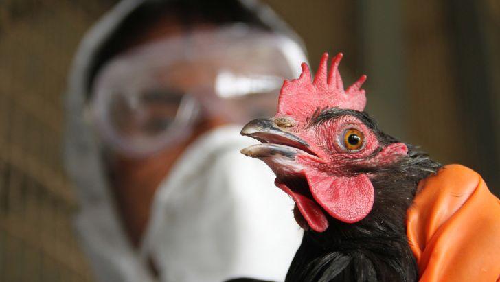 آنفلوآنزای فوق حاد پرندگان در کلیبر مشاهده شد