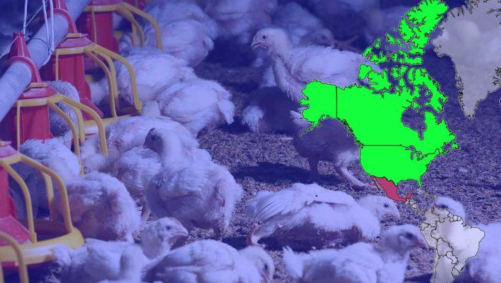 3 عامل تأثیرگذار بر روی سودآوری صنعت مرغداری امریکا