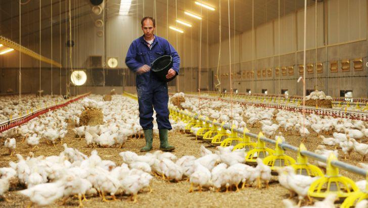 پیشنهادات یک تولیدکننده برای تنظیم بازار مرغ