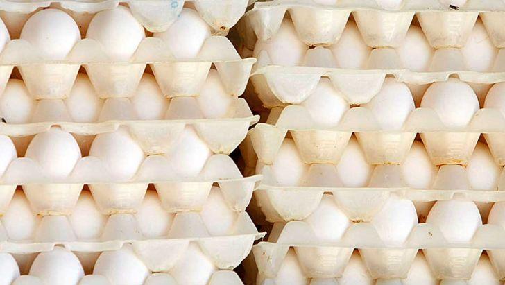 تخم مرغ با قیمت تضمینی از مرغداران خریداری می شود