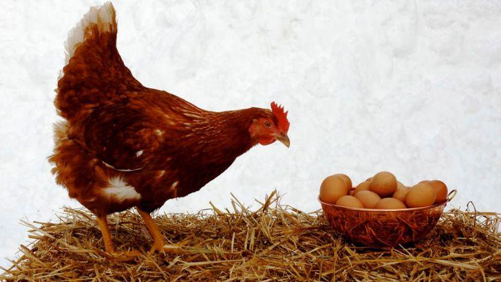 دلایل ثبات در بازار گوشت،مرغ و تخممرغ