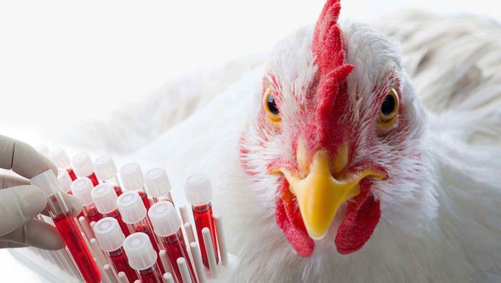 موسسه رازی ظرفیت تولید ۷۵ درصد واکسن طیور کشور را دارد