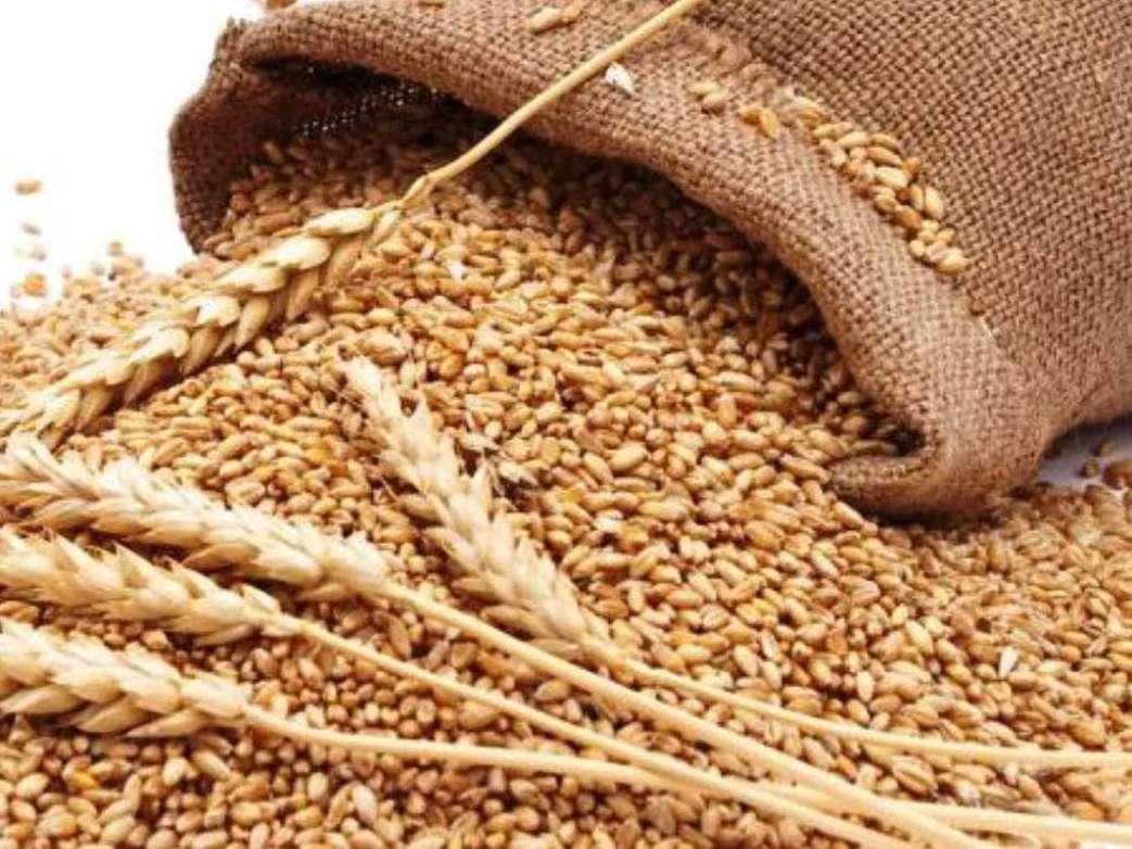 واردات نهادههای دامی با تولید خوراک دام از نیشکر کاهش مییابد
