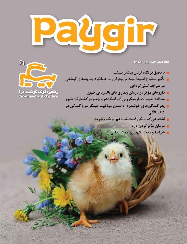دانلود مجله پیگیر - شماره 61