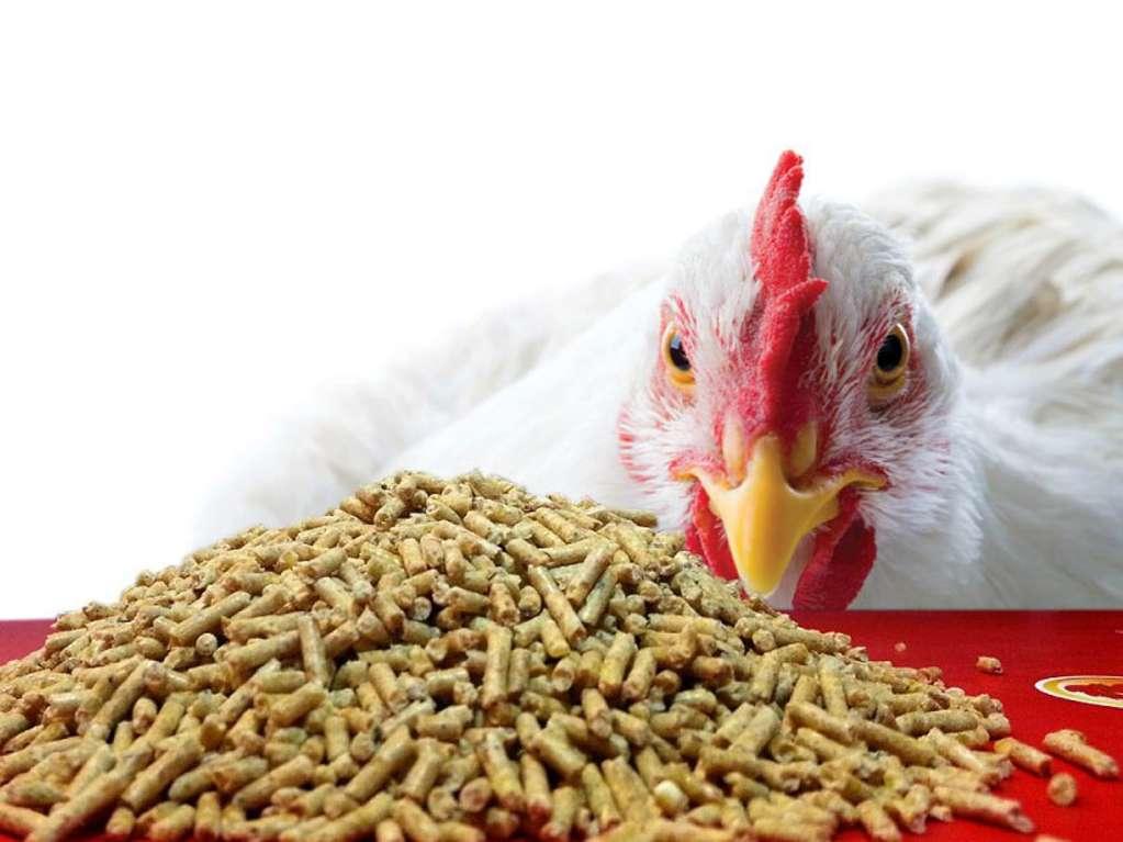 ارتباط رژیم غذایی، کیفیت جوجه ها و پرورش مرغ