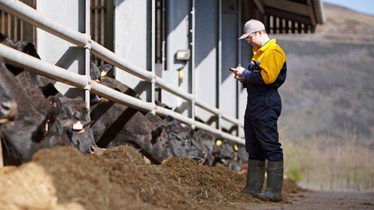 قرص های هوشمندی که منجر به کاهش مرگ و میر گلۀ گوساله های شیرخوار شدند