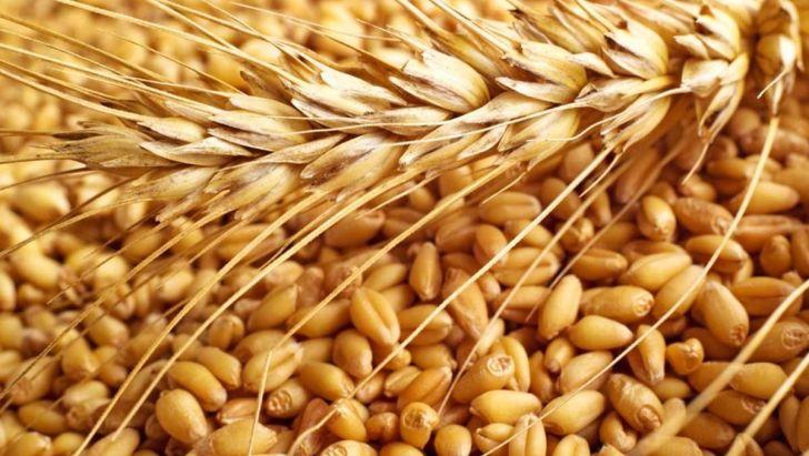 کاهش قیمت گندم و ذرت در بازارهای جهانی