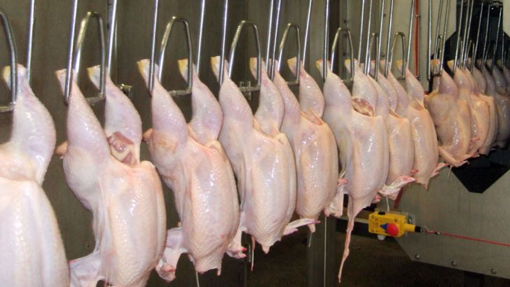 نمیتوان برای مرغ قیمت ثابت تعیین کرد